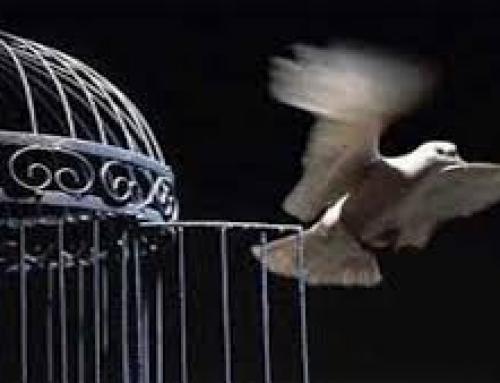 آزادی مشروط جایگزینی برای مجازات حبس